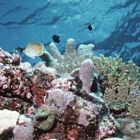 Корали на Големия бариерен риф