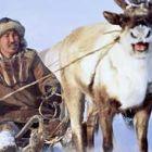 Шейна със северни елени