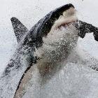 Пир край острова на тюлените